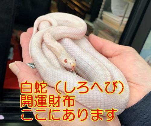 白蛇財布 しろへび 開運財布